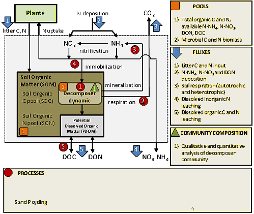 Schematic overview of major pools, fluxes, processes and qualitative measures