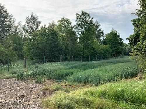 Foto pole nabízeného k pronájmu