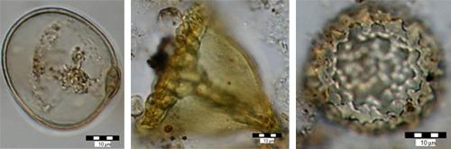 Mikrofotografie pylů z lokality Štúrová
