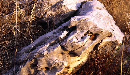 Vápenec, zástupce sedimentárních hornin