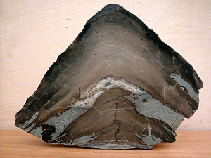 Průřez stromatolitem z ostrova Gotland (Švédsko)