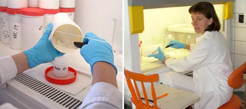 Odběr vzorků námraz pro analýzu netradičních izotopových systémů